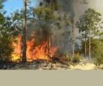 Incendio Pinar del Rio
